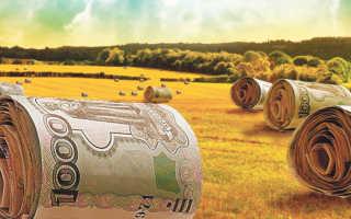 Грант на развитие сельского хозяйства: как правильно его получить