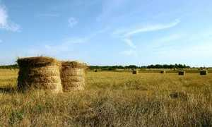 Субсидирование сельского хозяйства: какие программы существуют