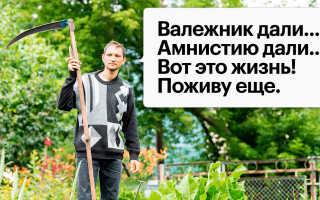 Дачная амнистия: как оформить земельный участок в собственность